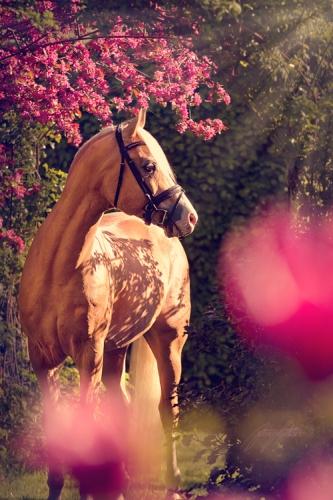 heste 154xweb